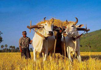 la-culture-au-cambodge
