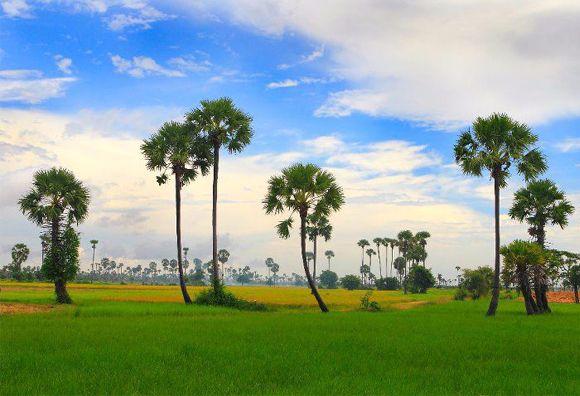 la-campagne-tranquille-cambodge-photos-voyage
