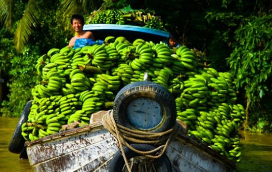 photos-delta-du-mekong-transport-de-banal